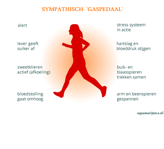 sympathisch 'gaspedaal' model